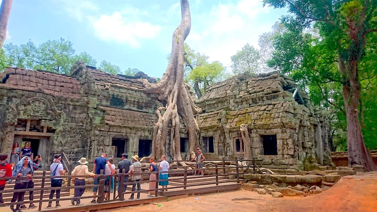 Ta Prohm Temple, Tomb Raider site - Tree Temple